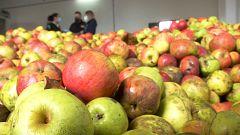 Aquí la Tierra - La buena manzana asturiana para una sidra inigualable