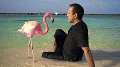 Documentales: 'The mystery of the pink flamingo' y 'Anatomía de un dandy'