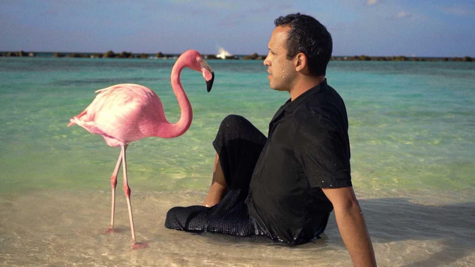 Documentales: 'The mystery of the pink flamingo' y 'Anatomía de un dandy'
