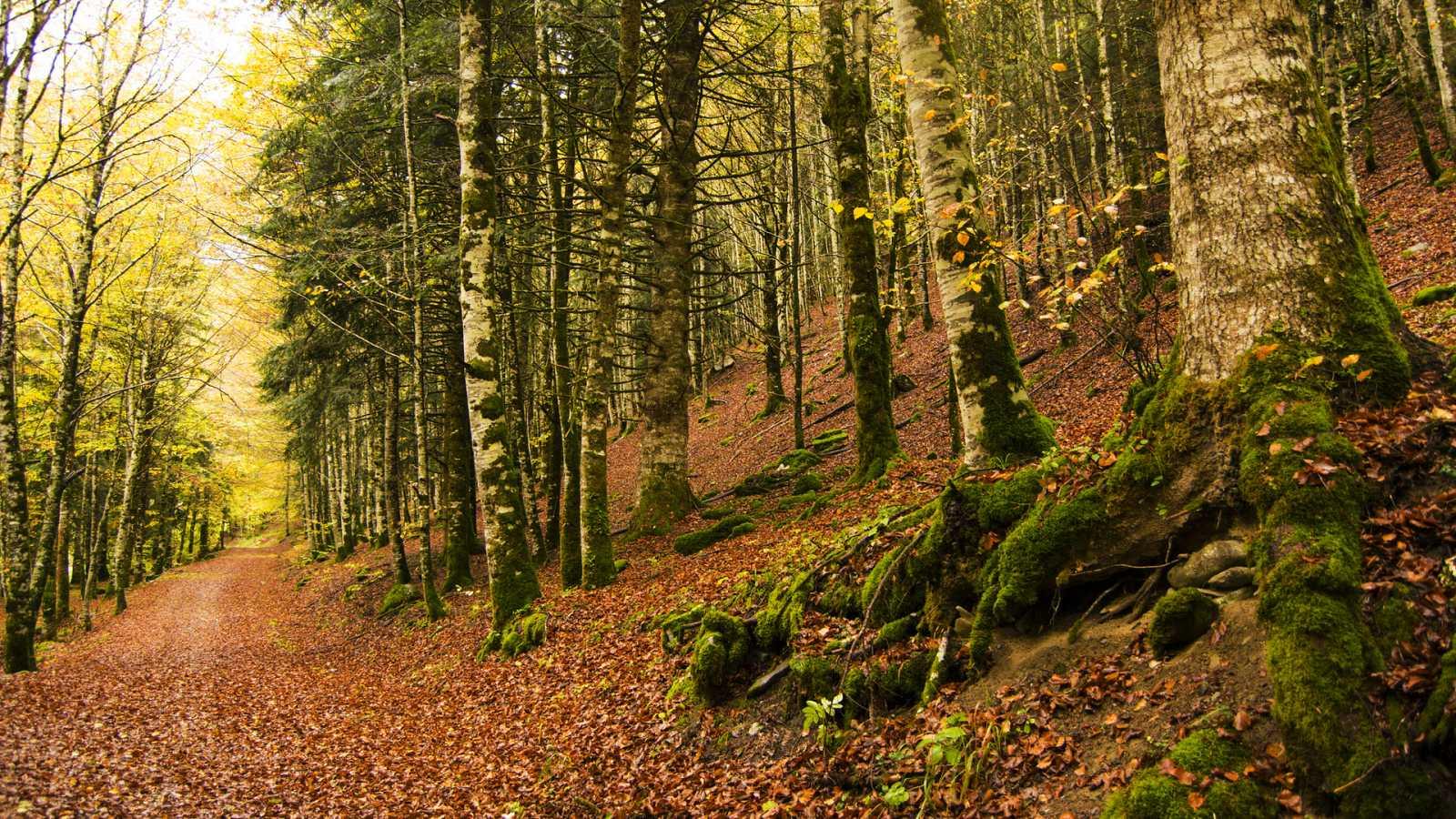 Aquí La Tierra - El bosque de Irati