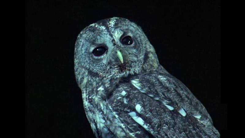 El hombre y la Tierra (Fauna ibérica) - Rapaces nocturnas 2 - ver ahora