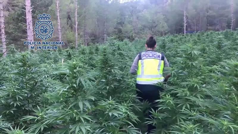 España, gran invernadero mundial de marihuana