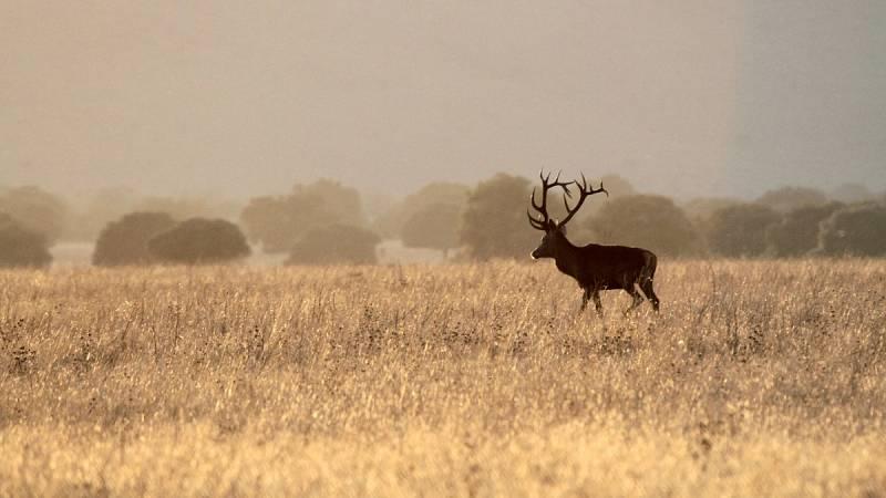 Cielos despejados en la mayor parte del país con algunas nieblas matinales
