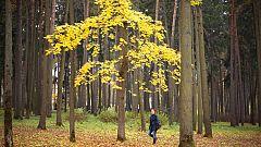 Un estudiante siberiano trepa diariamente a un árbol para seguir sus estudios on line