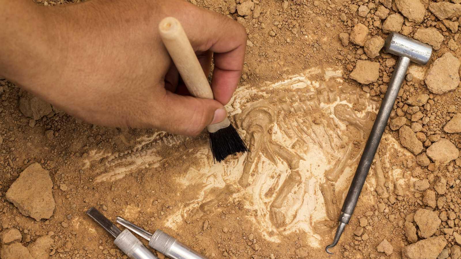 España Directo - Once en el paleontológico