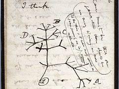 Los cuadernos perdidos de Darwin