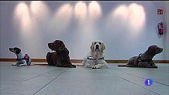 Terapia asistida con cans para menores vítimas da violencia machista