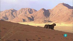 Velocitat mortal 2: El desert
