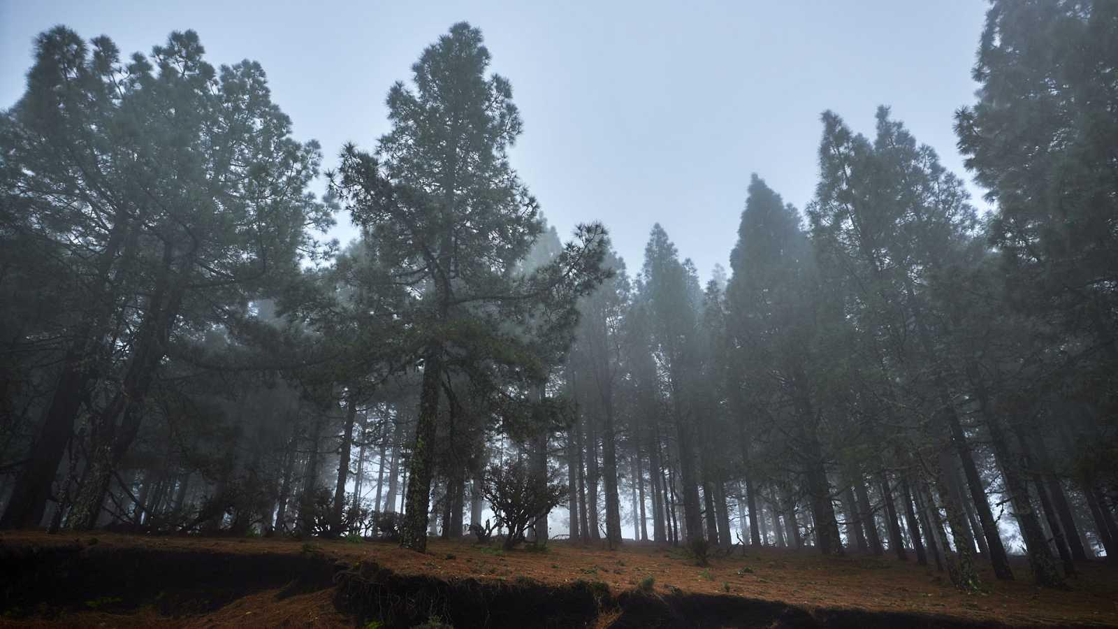 Precipitaciones localmente fuertes en Canarias - Ver ahora