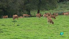 Agrosfera - Laboratorio de ideas - Investigación carne