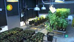 Agrosfera - Laboratorio de ideas - Cañamo Investigación