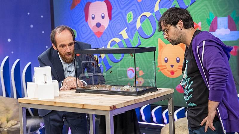 Órbita Laika - Biología con Ricardo Moure - Cucarachas