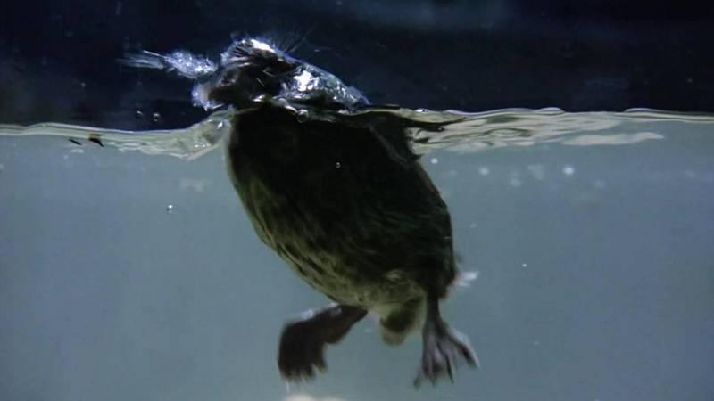 El hombre y la Tierra (Fauna ibérica) - La conquista del agua I - ver ahora