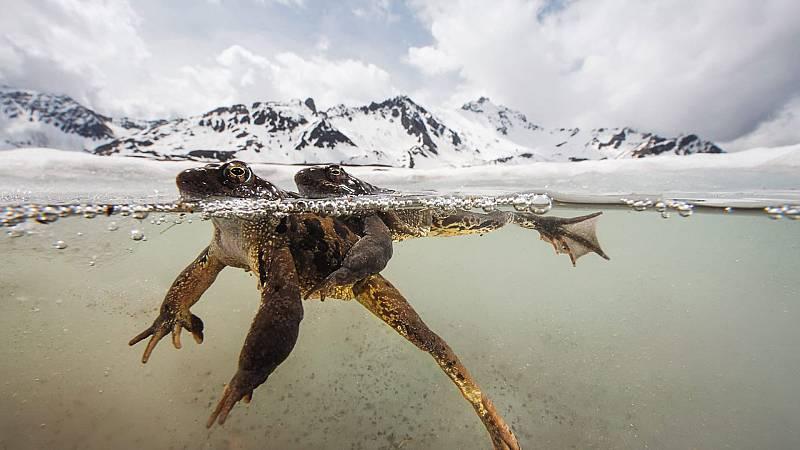 El documental - El santuario: Sobreviviendo en los Alpes, episodio 2 - ver ahora