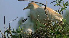 El hombre y la Tierra (Fauna ibérica) - El parque nacional de Doñana 3