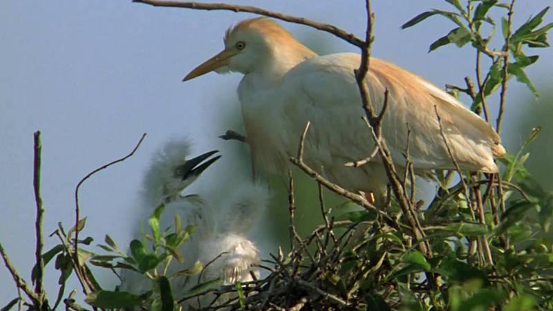 El hombre y la Tierra (Fauna ibérica) - El parque nacional de Doñana 3 - ver ahora