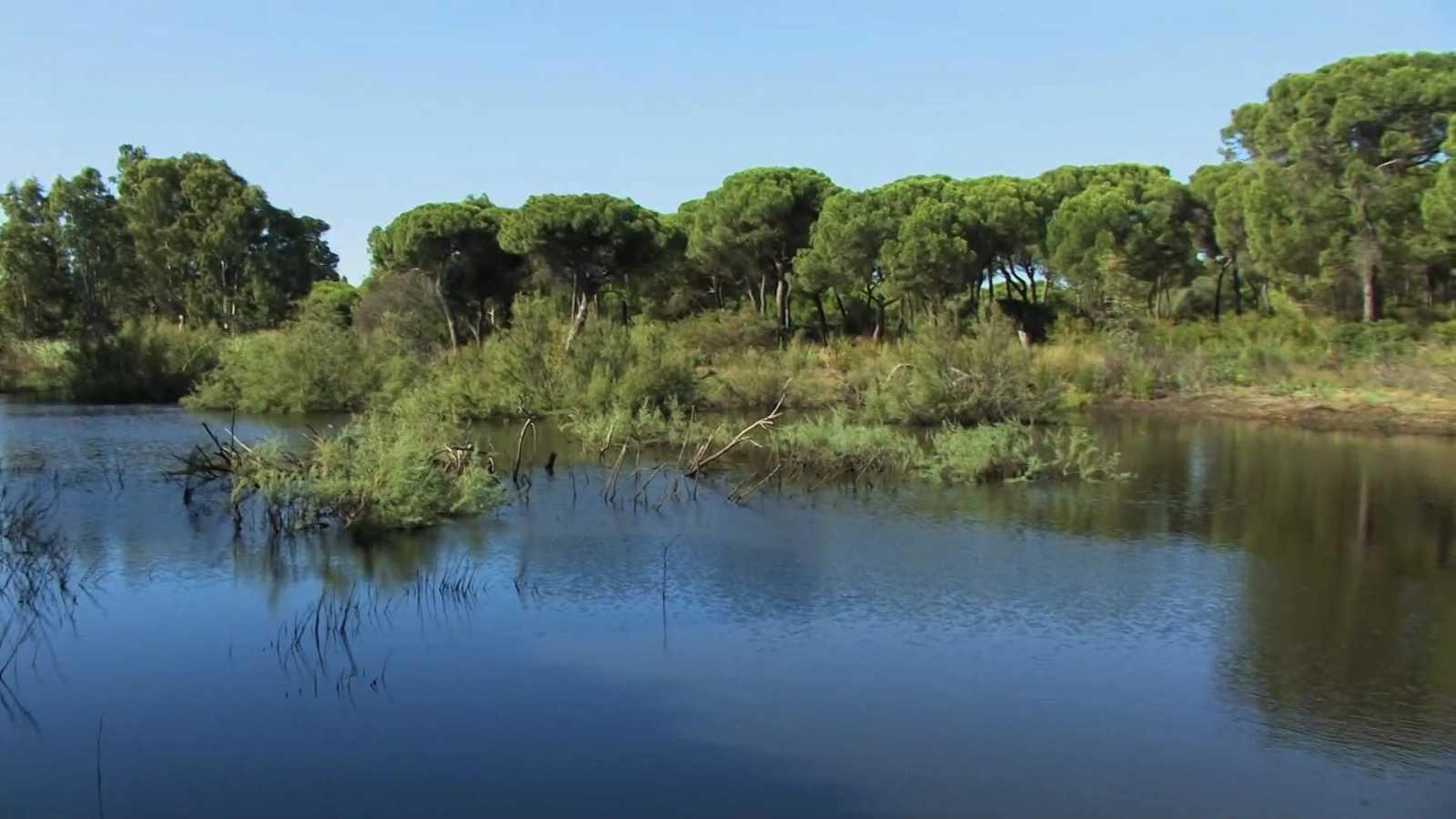 El bosque protector - Fauna amenazada: Águila pescadora - ver ahora