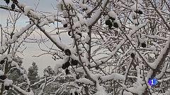 Dissabte al matí nevarà a tot l'interior i a la costa la cota de neu voltarà els 100-200 metres