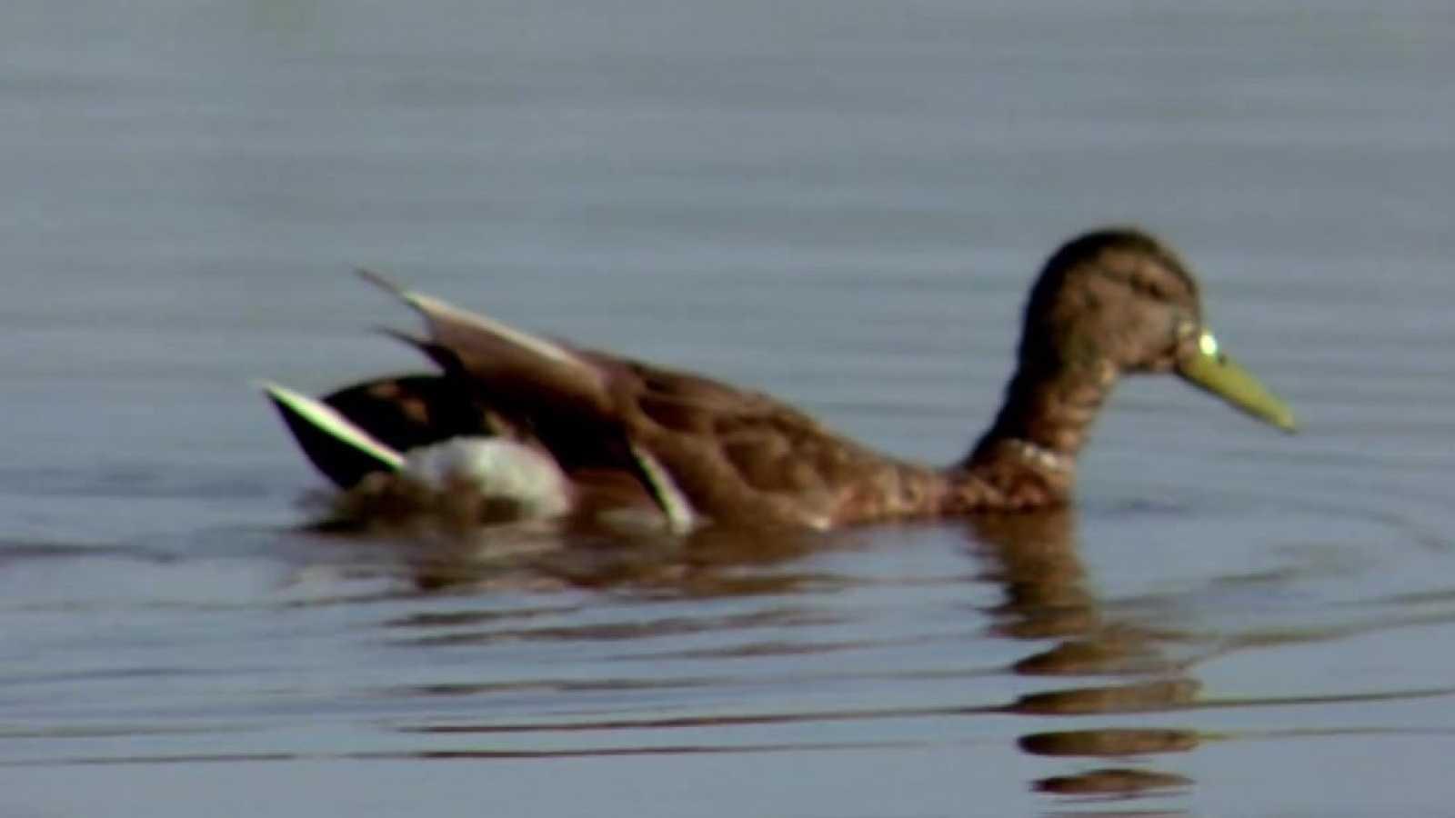 El hombre y la Tierra (Fauna ibérica) - El parque nacional de Doñana 4 - ver ahora