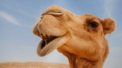 Aquí La Tierra - Leche de camella