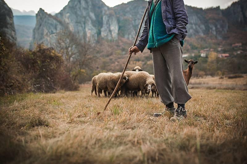 Aquí la Tierra - ¿Se conoce a un buen pastor por la madera?