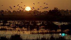 Grans documentals - Les històries del bosc mediterrani: El cuirassat del bosc