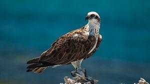La Isla Rottnest, el reino de los quokka: Episodio 2