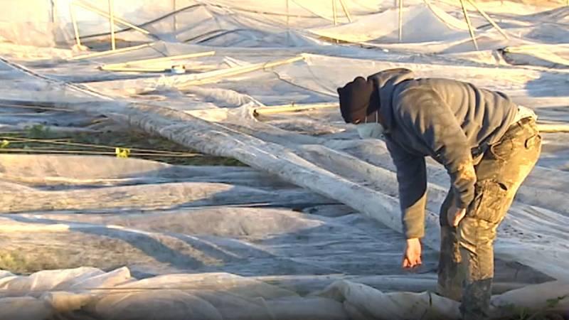 """Javier, agricultor en Zaragoza, tras el paso del temporal: """"Es la primera vez en mi vida que lloro por el campo"""""""