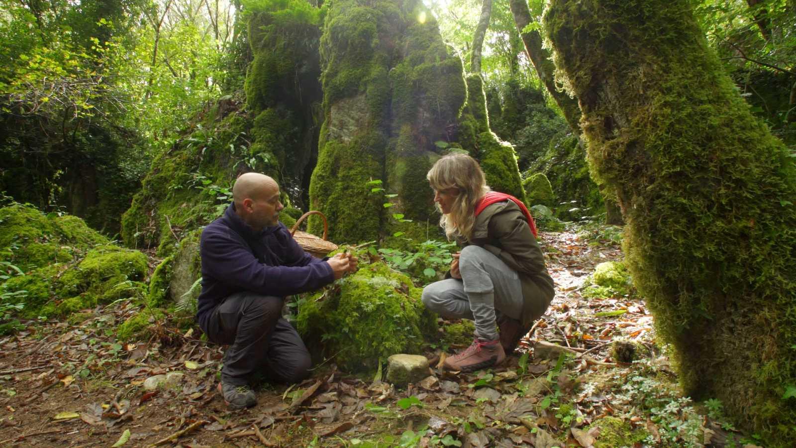El señor de los bosques - Dos Grobos - ver ahora