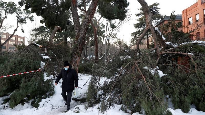 El temporal Filomena daña más de 600.000 árboles en Madrid