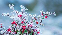 Probabilidad de heladas localmente fuertes en el norte de la meseta Sur y en el sur del sistema Ibérico
