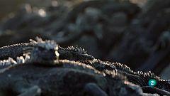 Grans Documentals - Les salvatges illes Galápagos - Preses de l'oceà
