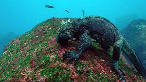 Las salvajes Islas Galápagos: presas del océano