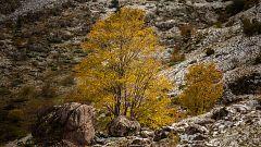 Las mínimas suben en la Meseta y bajan en Galicia, Pirineos y norte del área mediterránea
