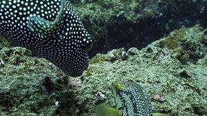 Las salvajes islas Galápagos: Atrapados en el paraíso