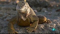 Grans Documentals - Les salvatges illes Galápagos - Atrapats al paradís
