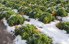 Aquí la Tierra - Aprendemos a cultivar bajo el hielo del invierno
