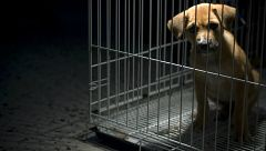 Para Todos La 2-Denunciar el maltrato animal