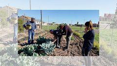 Aquí la Tierra - Ramón Arangüena y la búsqueda de nuevas verduras en Valencia