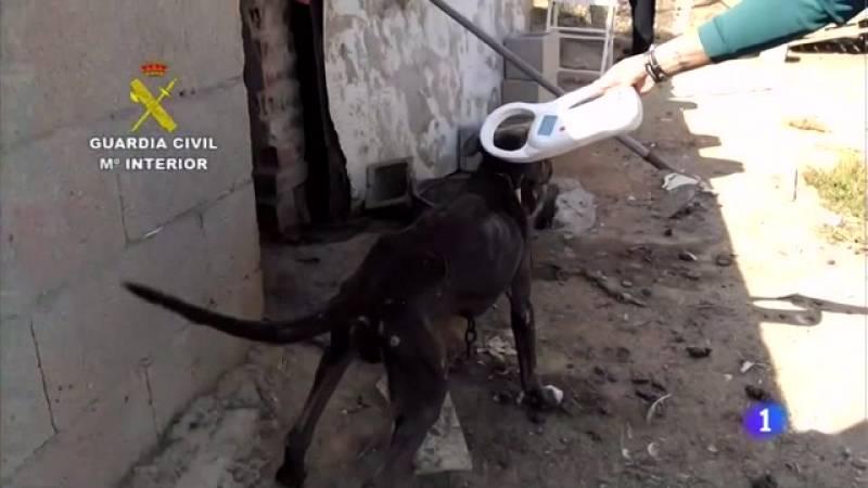 Nueva ley contra el maltrato animal