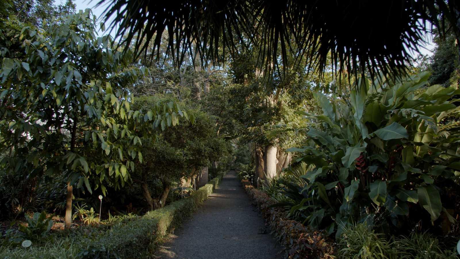 Jardines con historia - Tenerife: Jardín de aclimatación de La Orotava - ver ahora