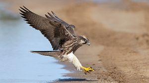 La carrera de la vida: Las aves primitivas