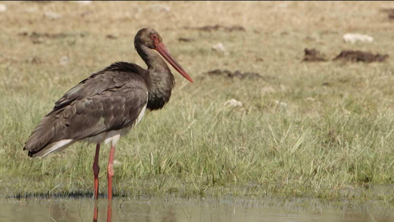 Red Natura 2000 - Programa 24 - ver ahora