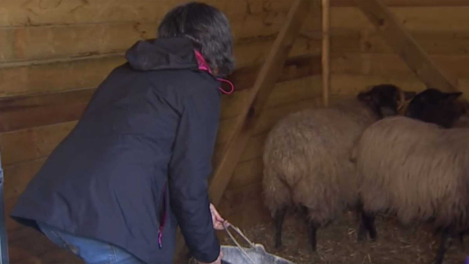 Cantabria podría albergar la primera Escuela de pastoras del Siglo XXI