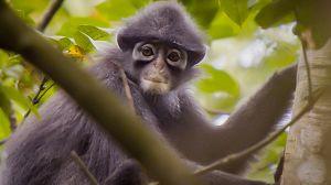 Ciudad salvaje: La vida en la jungla