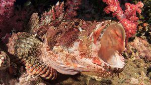 La carrera de la vida: Los depredadores submarinos