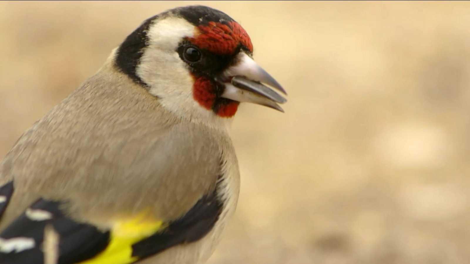 Red Natura 2000 - Programa 25 - ver ahora