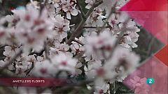 La Metro -Ametllers florits, Brossa marina i Buscant una oportunitat