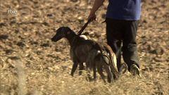 Jara y sedal - Carreras en La Mancha