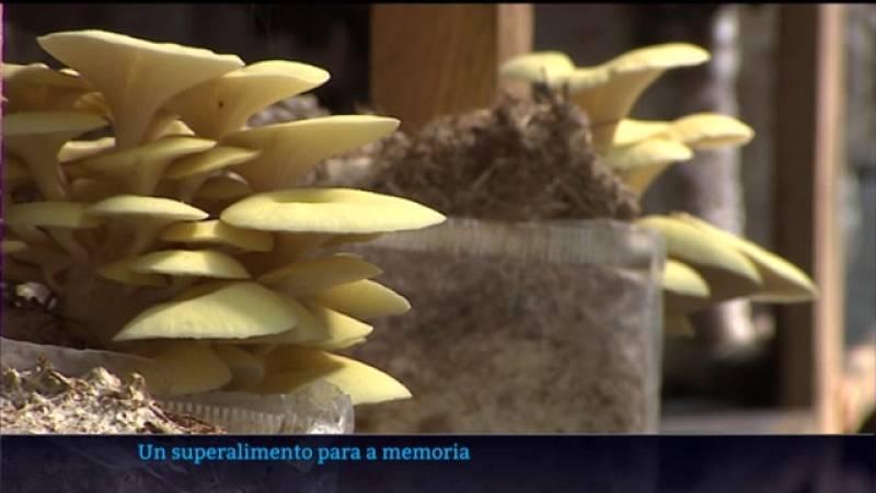 Un 'superalimento' para a memoria a base de castañas e cogomelos